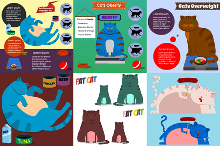 chubby cartoon: Set of cats overweight infographics and illustrations in flat style.