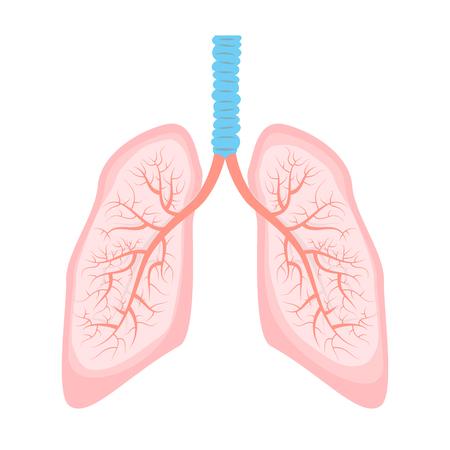 persona respirando: Pulmones humanos ilustraci�n con el �rbol bronquial. Pulm�n humano en el vector.