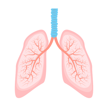 Human lungs illustration with bronchial tree. Human lung in vector.