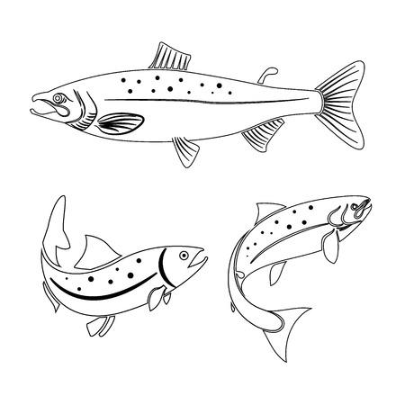 Set of salmon fish isolated on white background.