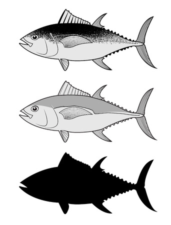 Set of the Tuna fish. Design elements in vector.