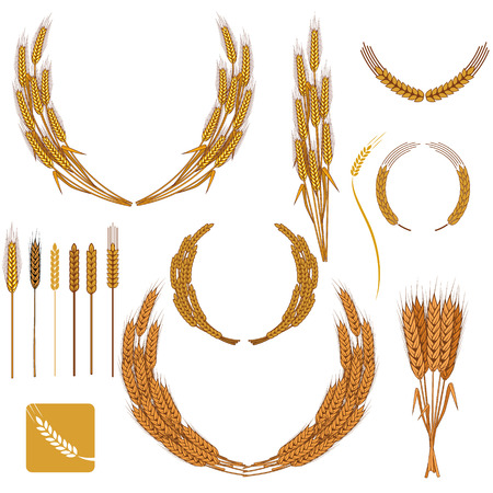oat field: Set of wheat wreath and design elements. Illustration