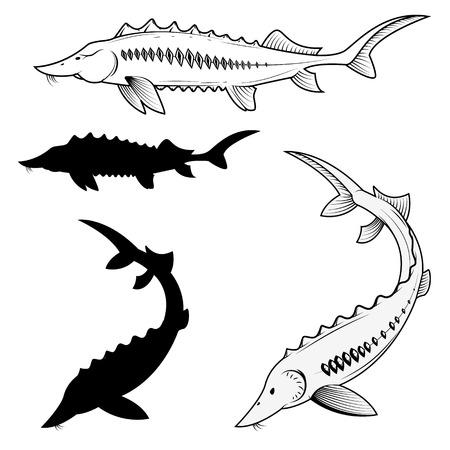 Serie di illustrazioni vettoriali storioni.