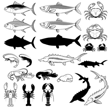 sturgeon: Set of the tuna, herring, Sturgeon, crabs, shrimps, lobsters. Illustration
