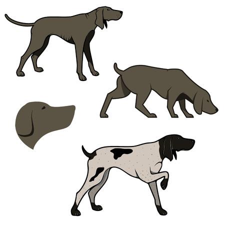 Set van jachthonden illustraties. Retrievers. Retro design grafisch element, embleem, insignes, teken, identiteit, poster. design elementen. Vector Illustratie