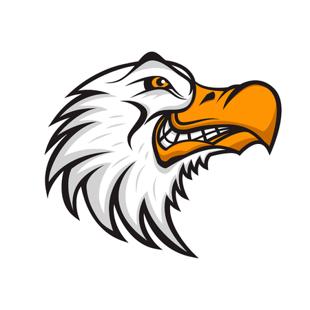 surf team: Head of angry Seagull isolated on white background. Sport team or club emblem template. Design element , label, sign, badge. Vector illustration. Illustration