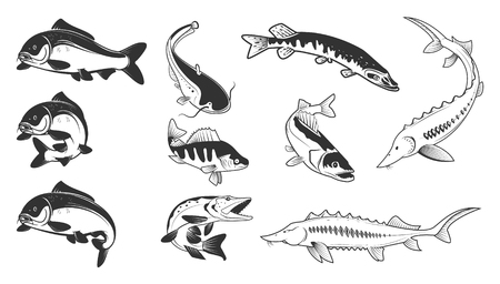 Set of river fish marks. River carp, crucian carp, perch, pike, catfish, perch, sturgeon. Design element for logo, label, emblem, sign, brand mark. Vector illustration.