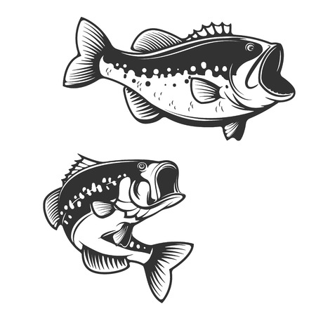 Sea bass fish silhouettes isolated on white background. Design elements for label, emblem for fishing club. illustration. Ilustrace