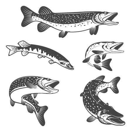 pike: Pike fish icons. Design elements for fishing club or team. Seafood. Vector illustration.