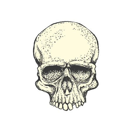 Human skull on white background. Design element for logo, label, Reklamní fotografie - 84511479