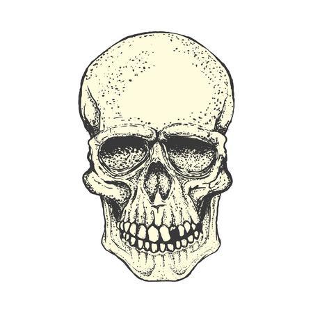 Human skull on white background. Design element for logo, label, Reklamní fotografie - 84511485