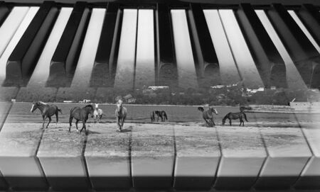 creative classical music background photo double exposure of piano keys and running horses