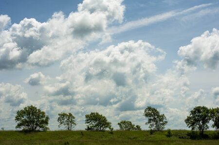 photo of green trees and cloudy sky on a summer day Stock fotó