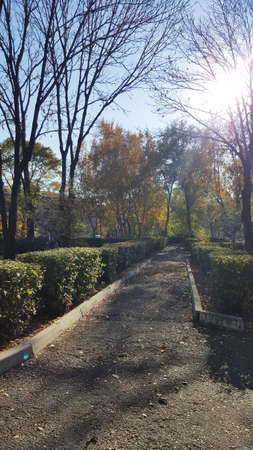 vertical art photo of a path in an autumn park with sun rays
