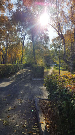 vertical photo of a path with shrubs and trees in an autumn park with sun rays
