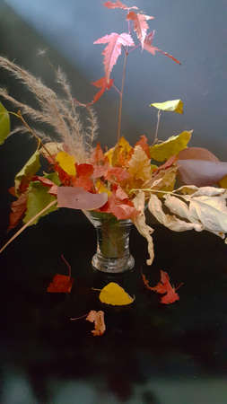 autumn bouquet of different leaves on a dark background with rays of light blue