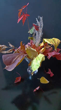 autumn bouquet close-up of different leaves on a dark background with rays of light Stock fotó