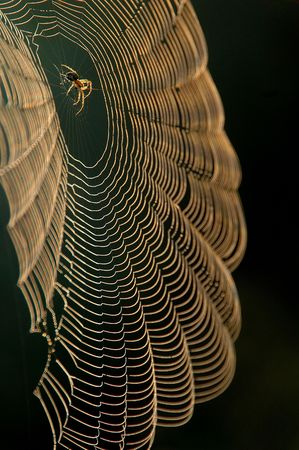 Spider sitting in center of the web
