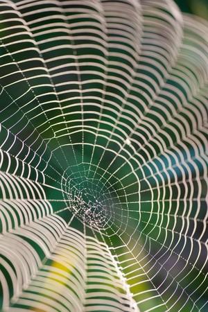 dewy spider web against dark foliage Stock Photo - 7910228