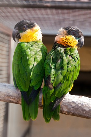 Beautiful exotic parrots in zoo Stock Photo - 7910203