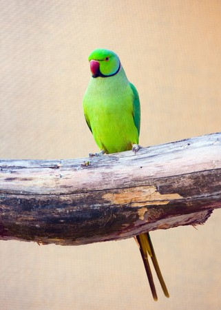 parrot tail: Beautiful exotic parrots in zoo Stock Photo