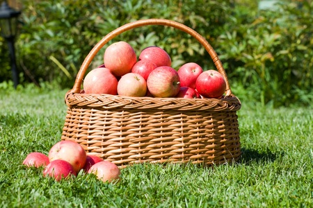 basket with red apples costs on a grass Stock Photo - 11597883