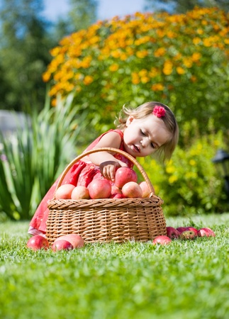 little girl collects the apples scattered on a grass in a basket Stock Photo - 11597945