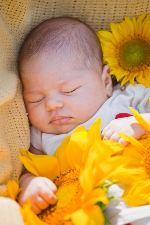 little newborn girl sleeps in surrounded with sunflowers photo