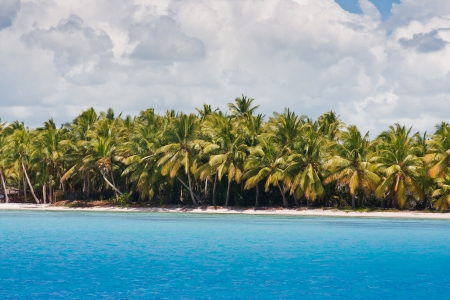 Palm trees grow on the bank of the tropical sea against the blue sky Stock Photo - 18573198