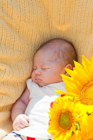 sleeps: little newborn girl sleeps in surrounded with sunflowers Stock Photo