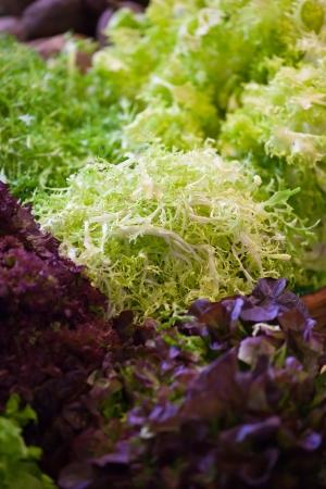 potherbs: Diferentes tipos de hierbas arom�ticas de temporada por el mercado extraburs�til