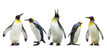 pinguins: Les manchots empereurs. isol� sur fond blanc Banque d'images