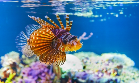 Different small tropical fish in coral reef underwater photo