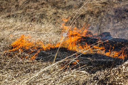 firestorm: Close up view at dry grass burning in forest fire