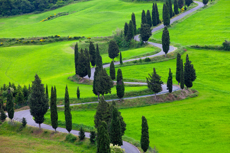 fields of flowers: Beautiful landscape of Tuscany with the twisting road and cypresses Stock Photo
