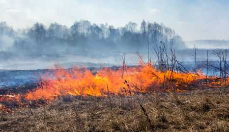 Close up view at dry grass burning in forest fire Фото со стока - 90011253
