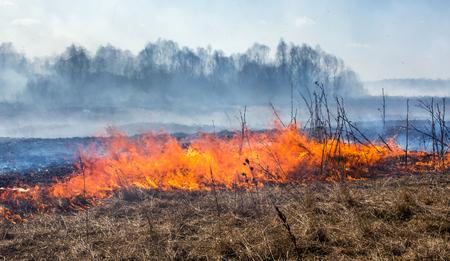 Sluit omhoog mening bij droog gras brandend in bosbrand