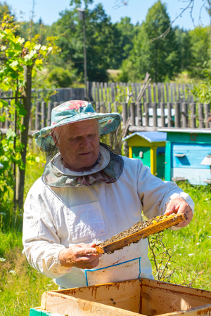 Beekeeper holding a frame of honeycomb. Working bee on honeycomb. Work bees in hive. Beekeeper checking a beehive.