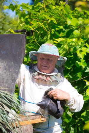 Beekeeper working in his apiary Imagens - 90263829
