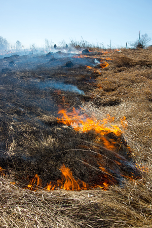 Close up view at dry grass burning in forest fire
