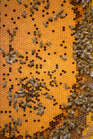 Work bees in hive Bees convert nectar into honey and close it in the honeycomb, and care for larvae Imagens - 90139098