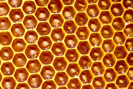 unfinished honey making in honeycombs Stock Photo