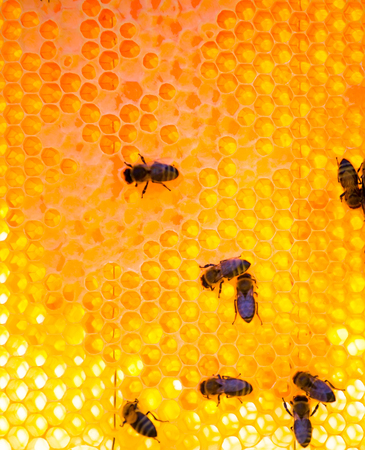 Bijen werken aan honingcellen. Macro close-up.
