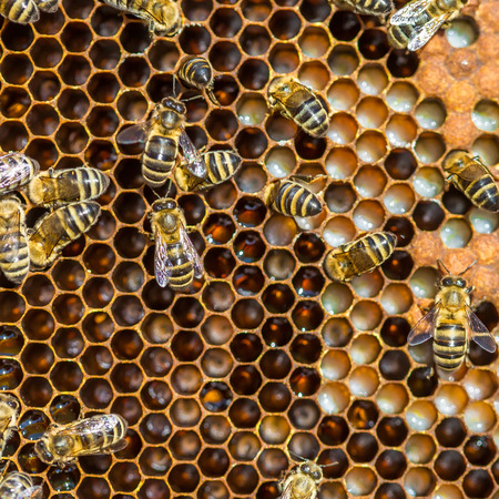 Bees working on honey cells. Close up macro. Imagens - 90106854