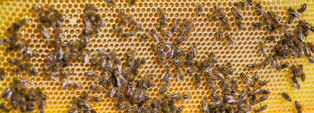 Bees working on honey cells. Close up macro. Imagens - 90139198
