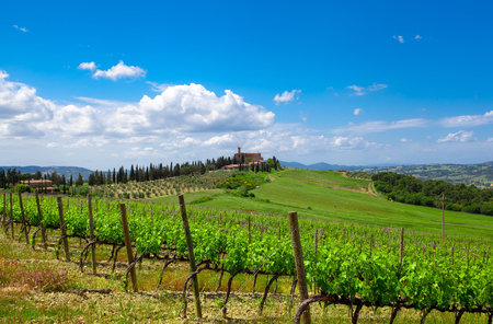 Hill of Tuscany with Vineyard