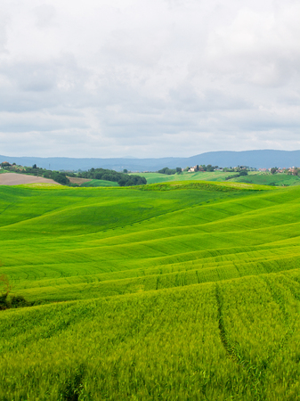 Beautiful summer rural landscape with wavy hills, Tuscany, Italy