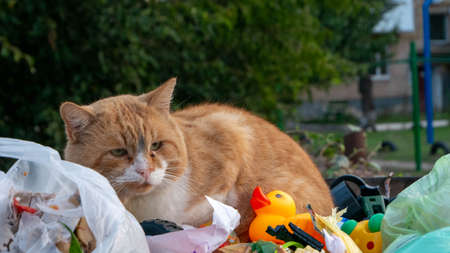 red cat in a trash can with a toy yellow duck