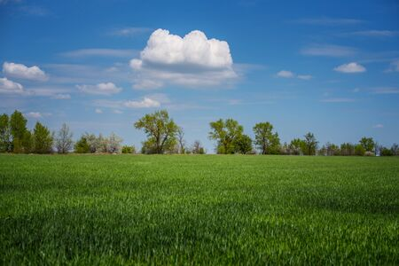 Agricultural field, beautiful view. Cloud and green grass on the field. Banco de Imagens