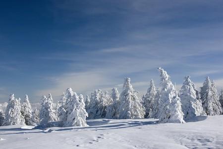 phenomena: Frozen pine trees on blue sky background Stock Photo